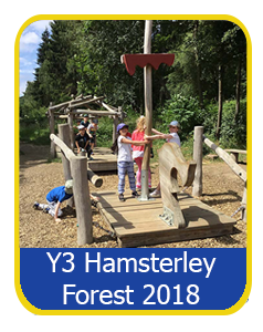 Year 3 Hamsterley Forest 2018